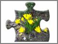 crocus jigsaw puzzle