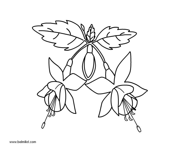 fuchsia coloring page