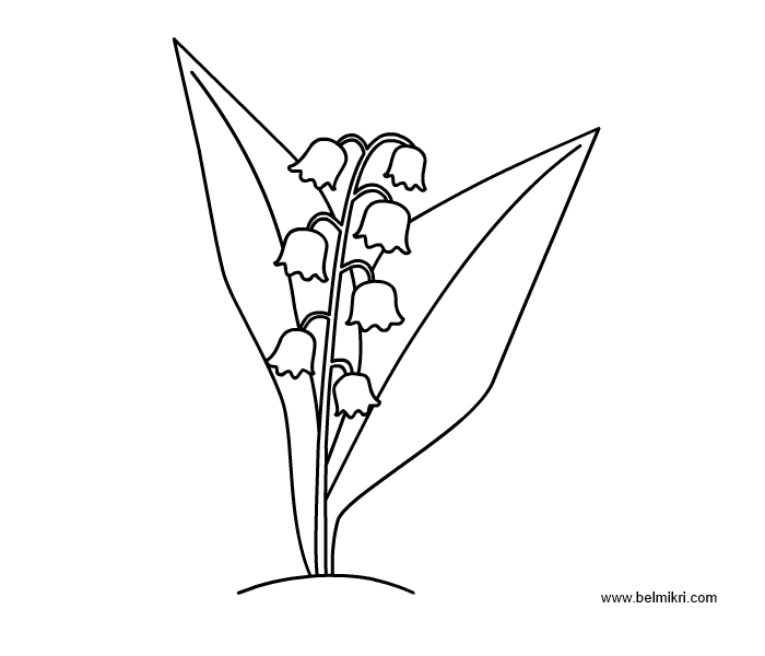 lilyvalley coloring page