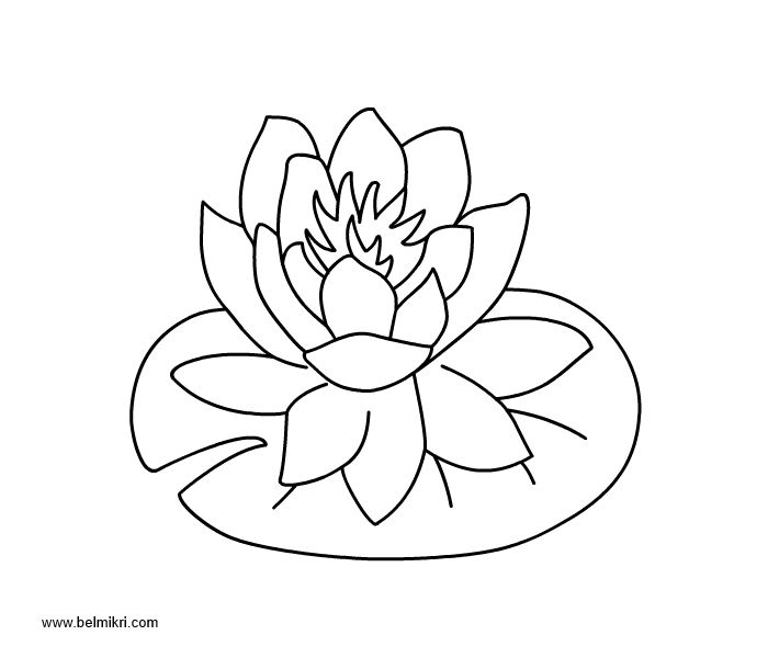waterlily coloring page